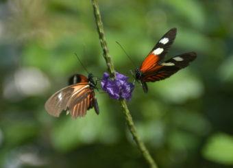 butterfly-1378183-1919x1275